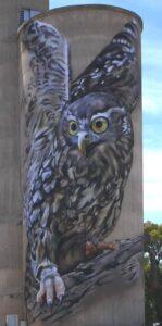 Goorambat silo barking owl